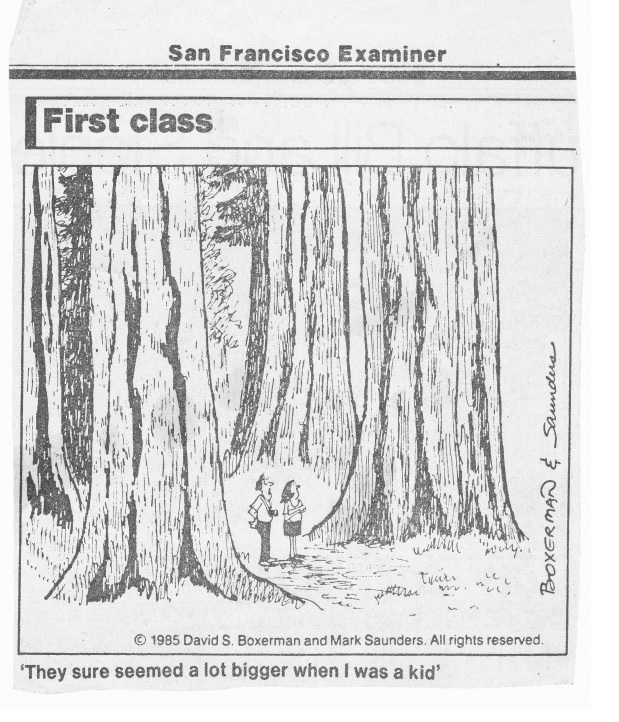 First Class_Redwoods